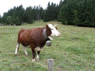 Ho la vache